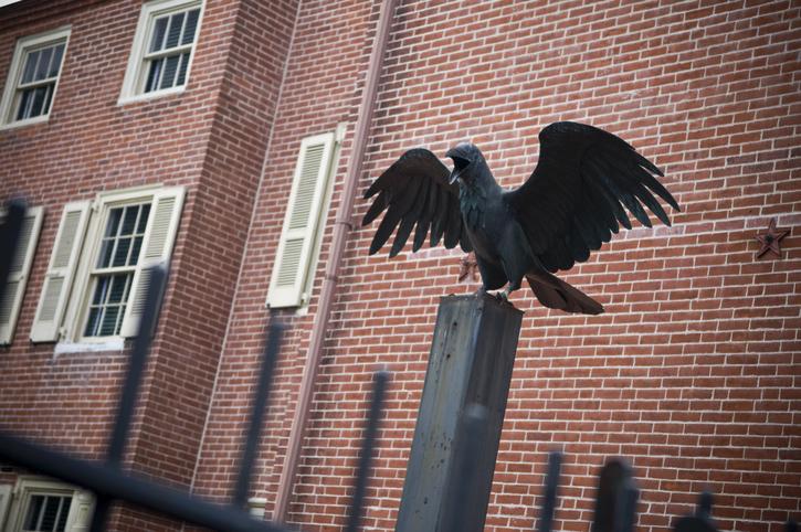 A raven outside of Edgar Allen Poe House
